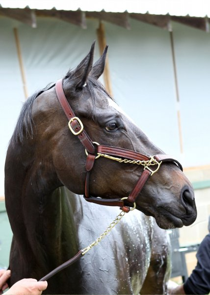 Zenyatta close-up with her head turned to her left.
