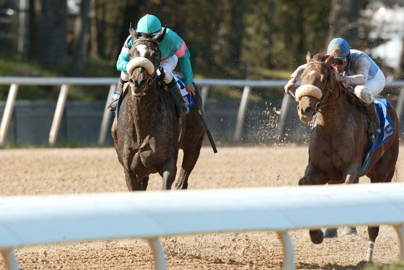Zenyatta and other horses running in a race.