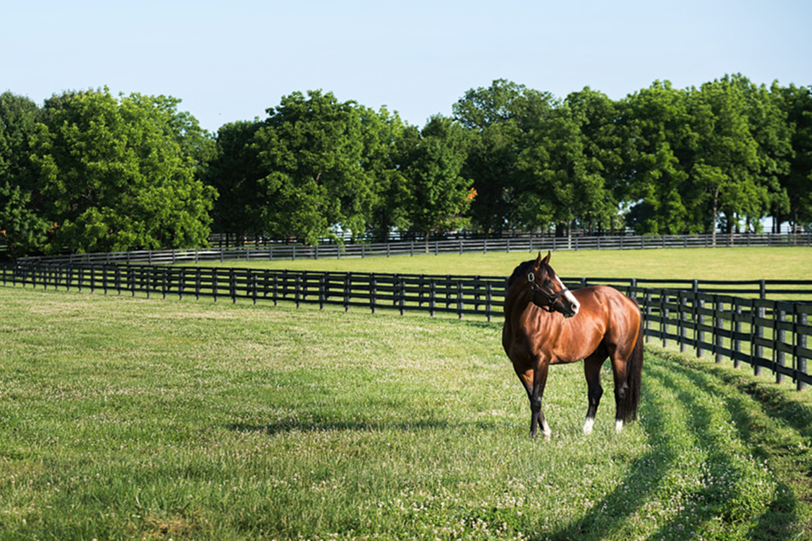 Image of Union Rags at Lane's End