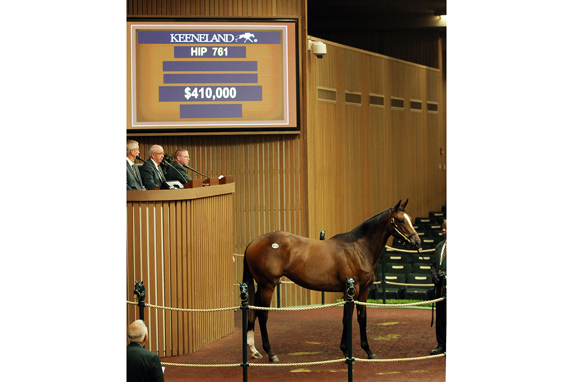 Hip 761 yearling at Keeneland September Sale 2018