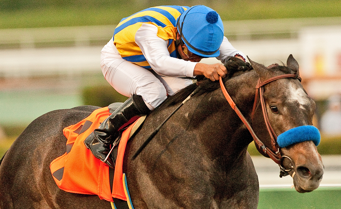 Racing Image of The Factor
