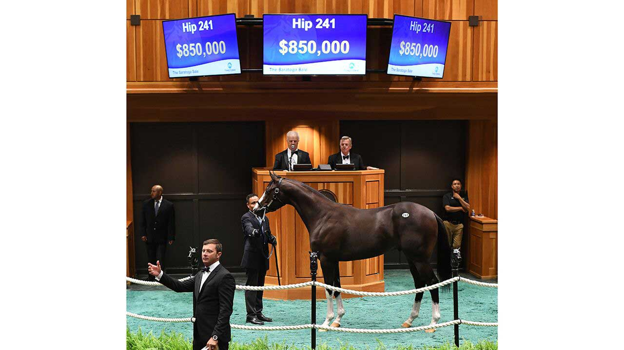 Hip 241 at Fasig-Tipton July Yearling Sale 2018