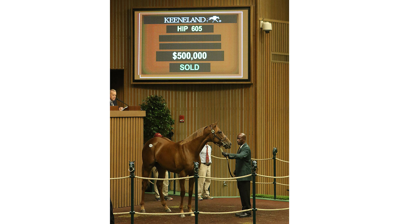 Hip 605 at Keeneland September Yearling Sale 2018