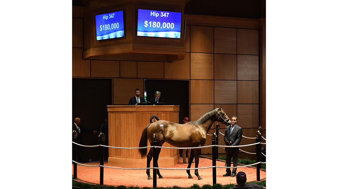 Yearling at Fasig-Tipton July Sale