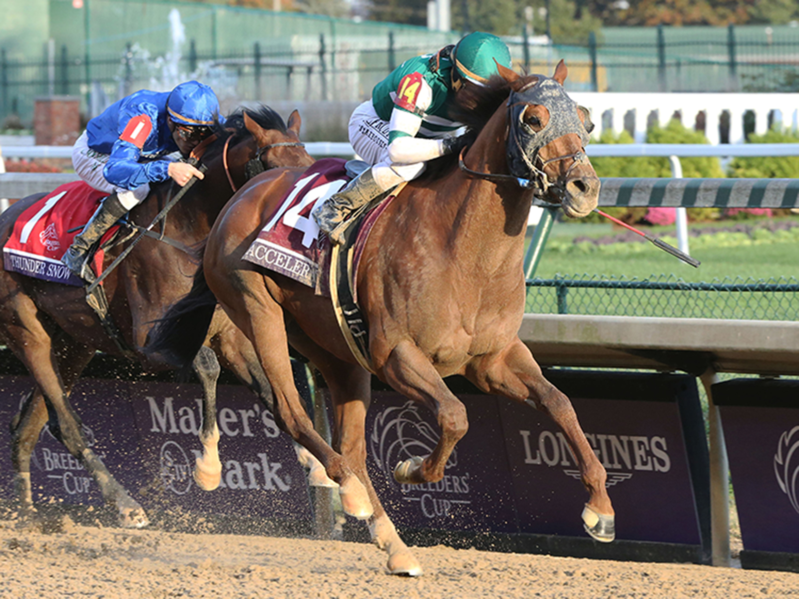 accelerate wins the breeders' cup classic